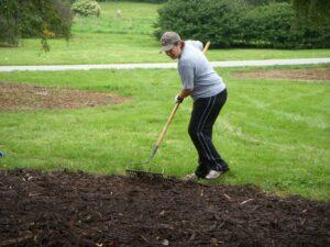 Volunteer Raking Mulch