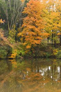 Arboretum Fall13 - 04