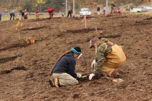 Interchange Planting 141112 - 173