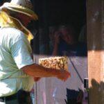 WannaBee a Beekeeper?