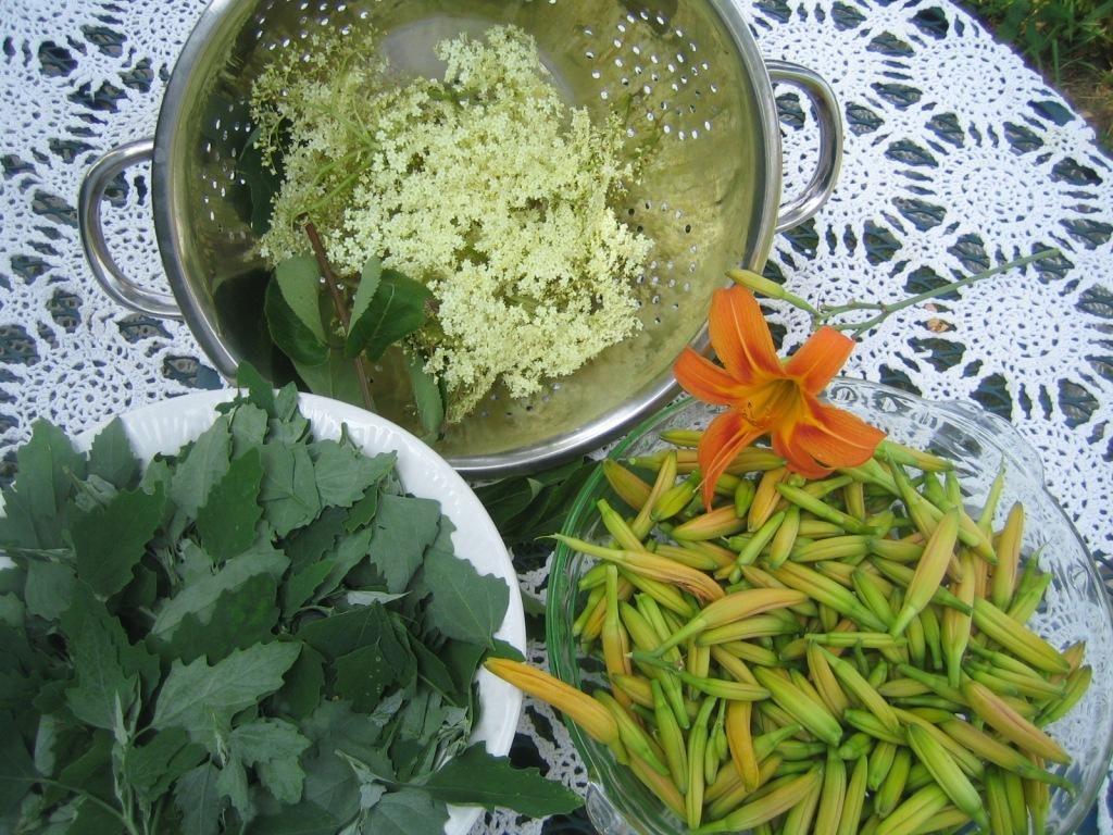 """Wild"" Food – Investigating Four Seasons of Wild Edible Plants"