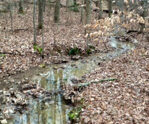 Ephemera creek