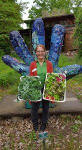 Lettuce Harvest 5-8-16
