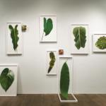 Bernheim Welcomes Artist in Residence, Eileen Neff