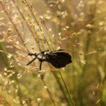 Wheel Bug BugFest13 - 275