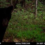Bear Trail Cam 1