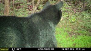 Bear Trail Cam 3