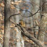 Squirrels in Winter