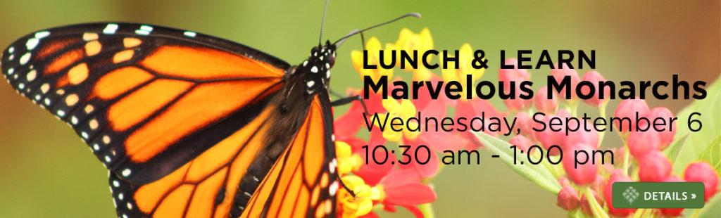 Lunch & Learn: Marvelous Monarchs