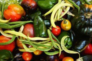 Virtual Discovery Stations: The Edible Garden