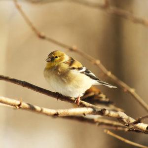 Virtual Discovery Station: Birding with Binoculars