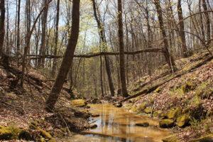 Natural Areas Intern