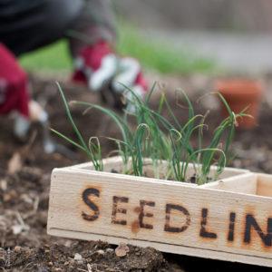 Plan your edible ornamental garden