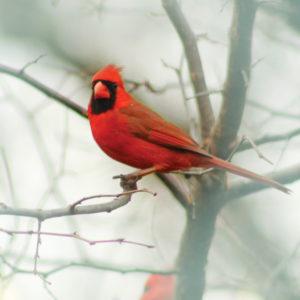 Great Backyard Bird Count - February 17, 2018