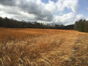 Bernheim to protect 494 more acres, extending northern boundary to Cedar Grove
