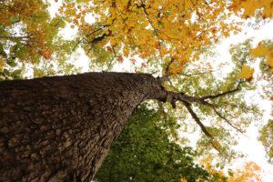 Bernheim at 90: Celebrating the Oak Collection