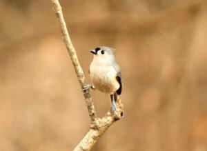 Birds of a feather flocking to Bernheim this season