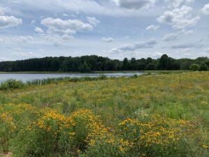 Bernheim's Spillway Becomes Pollinator Habitat